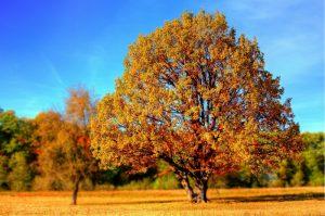 mylene_doleans_coaching28_arbre_racines